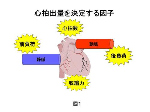 心拍出量の決定因子