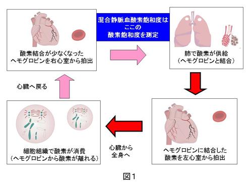 混合静脈血酸素飽和度